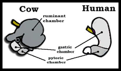digestive system of birds pdf